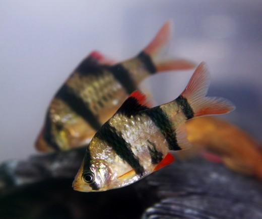 fish to pet